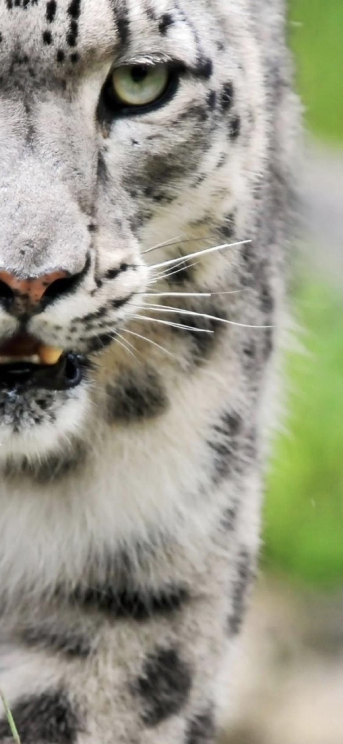 Un primo piano di un felino - Sfondi per iPhone, i migliori da scaricare gratis