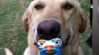 I doni più strambi degli animali ai loro padroni