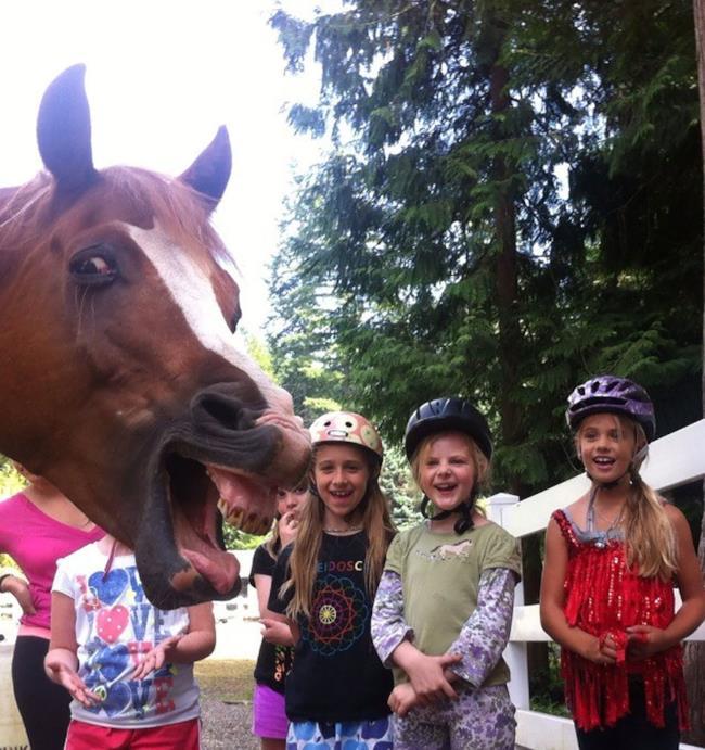 Un cavallo che nitrisce s'inserisce in una foto