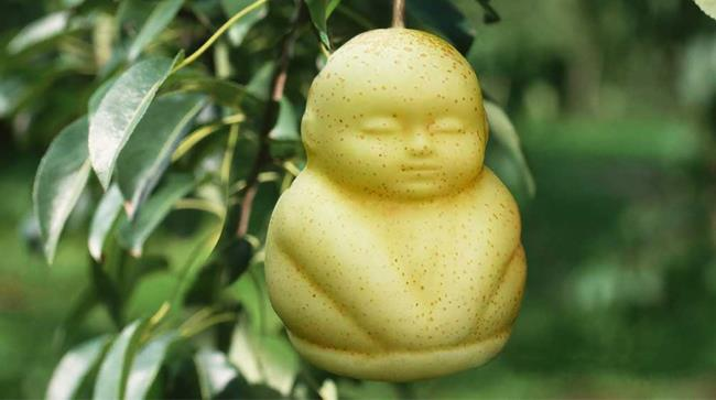 Pera a forma di bambino prodotta in Cina