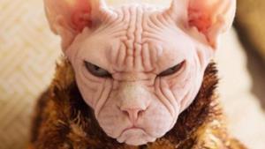 Una foto del gatto Loki