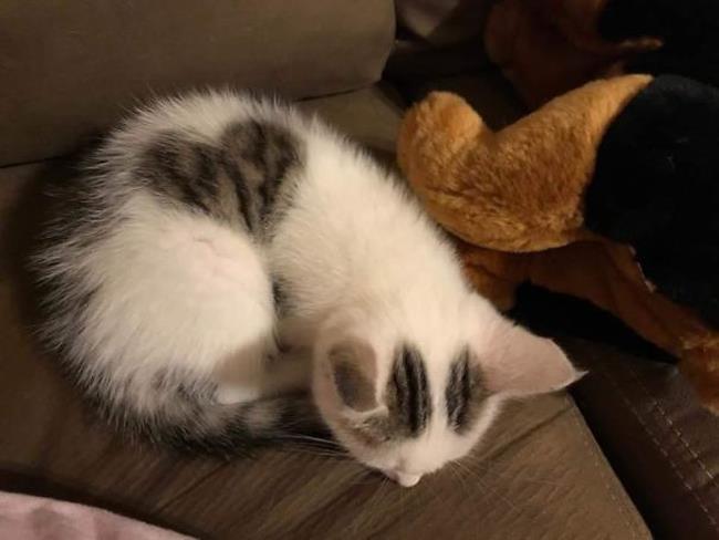 Un gatto col cuore sul dorso