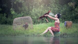 Una donna sputa su un gallo
