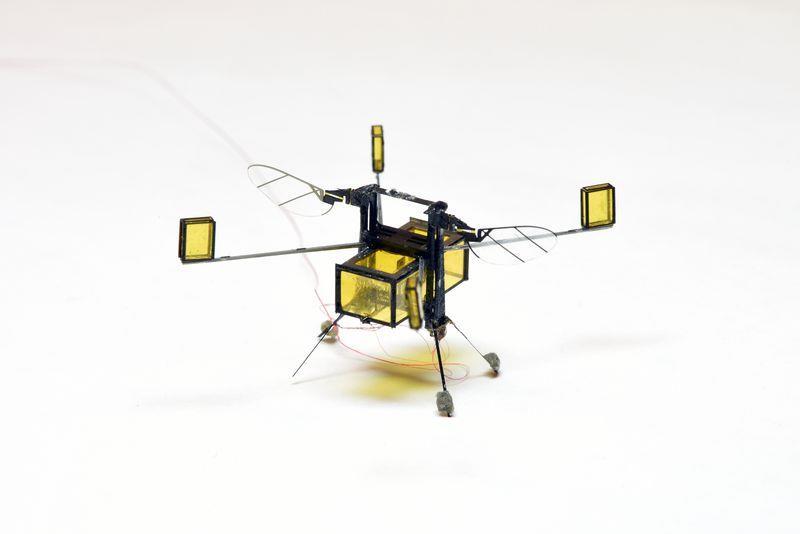 Un modello di ape robotica