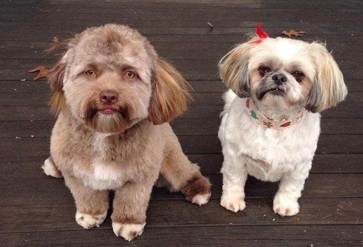 Yogi e sua sorella
