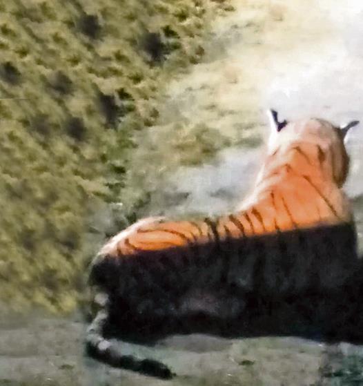 Una foto di un'innocua tigre peluche
