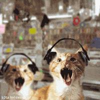 GIF di gatti che ascoltano la musica