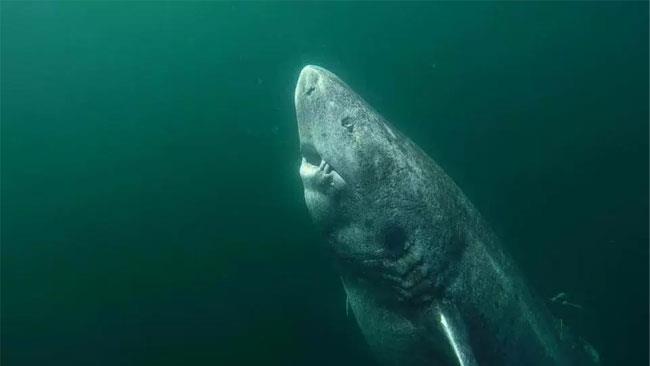 La foto di un gigantesco squalo