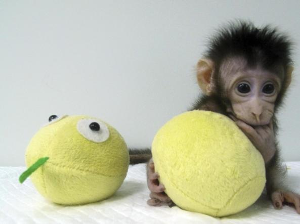 La foto della scimmia.