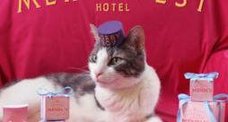 Grand Budapest hotel poster con gatto