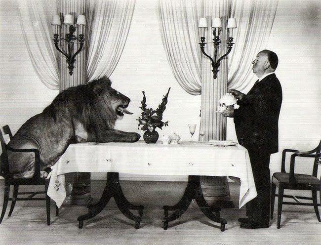 Immagine che raffigura Alfred Hitchcock che beve il te con il leone della Metro-Goldwyn-Mayer