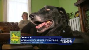 Abby, il labrador che è tornato a casa dopo 10 anni