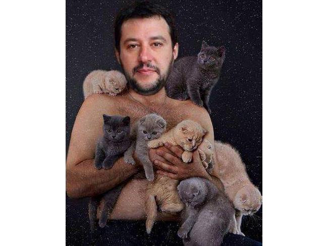 Salvini nudo con i gattini