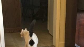 Un gatto col rombo