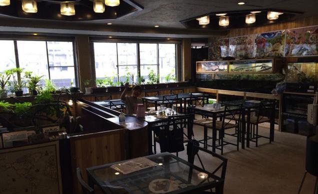 Uno dei café giapponesi dedicati ai rettili