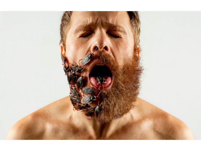 Barba di scarafaggi