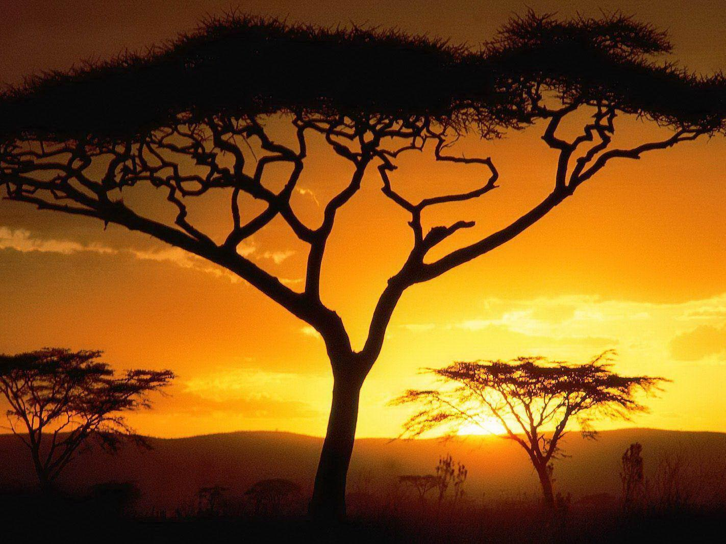 Il tramonto nella savana - Sfondi per PC, iPhone, Android e profilo WhatsApp da scaricare