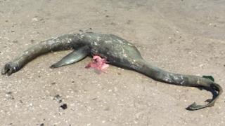 La carcassa della misteriosa creatura marina rinvenuta in Georgia