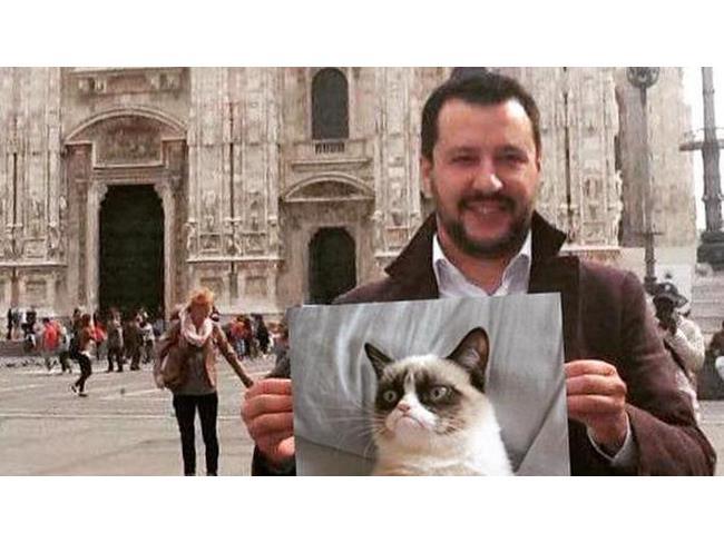 Salvini e la foto di Grumpy Cat