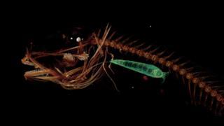 Il pesce che vive nelle profondità dagli abissi