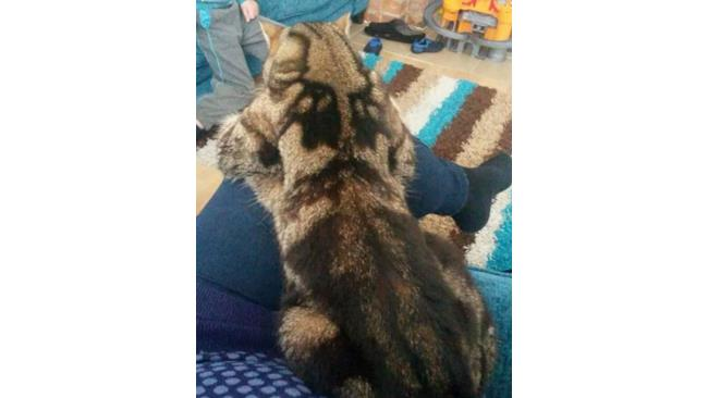 Un gatto col test di Rorschach