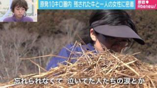 Tani Sakiyuki mentre prepara il cibo per le mucche di Fukushima