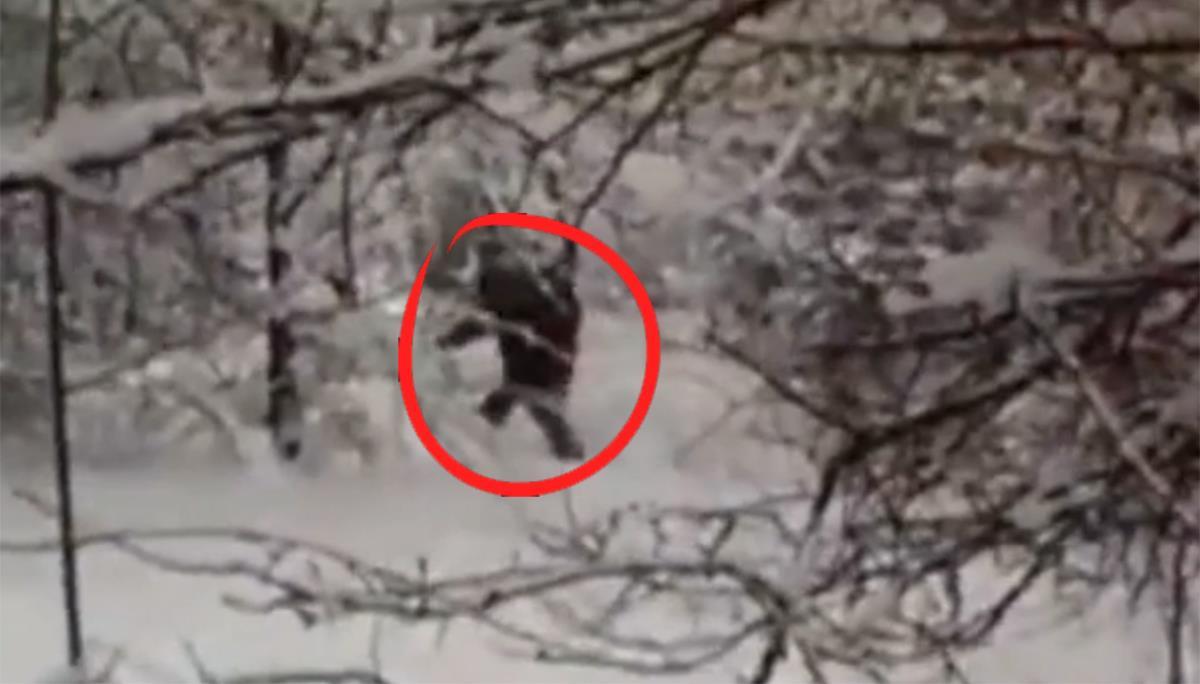 Uno degli avvistamenti dell'uomo delle nevi