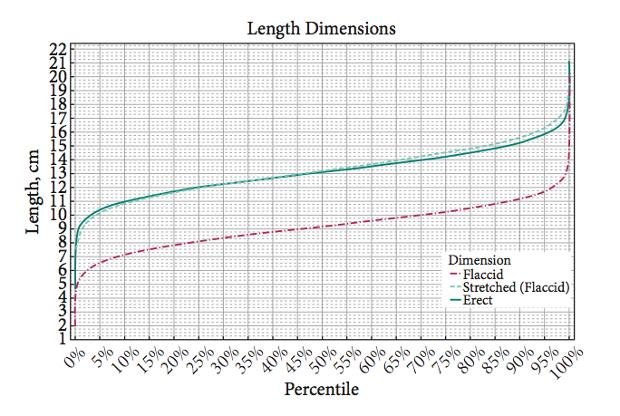 Grafico con le dimensioni medie di un pene umano