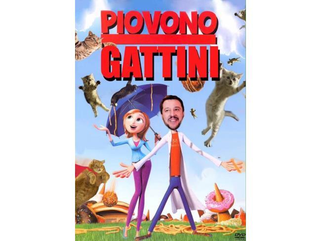I gattini continuano a piovere su Salvini