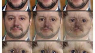 Salvini si trasforma in un gatto