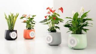 Le piante 007