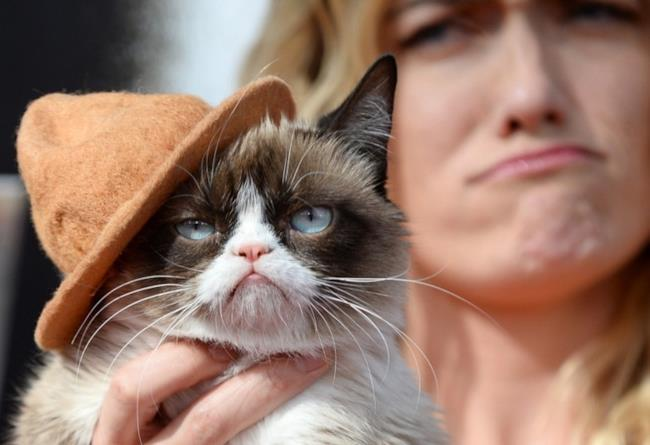 Il famoso Grumpy Cat agli MTV Movie Awards