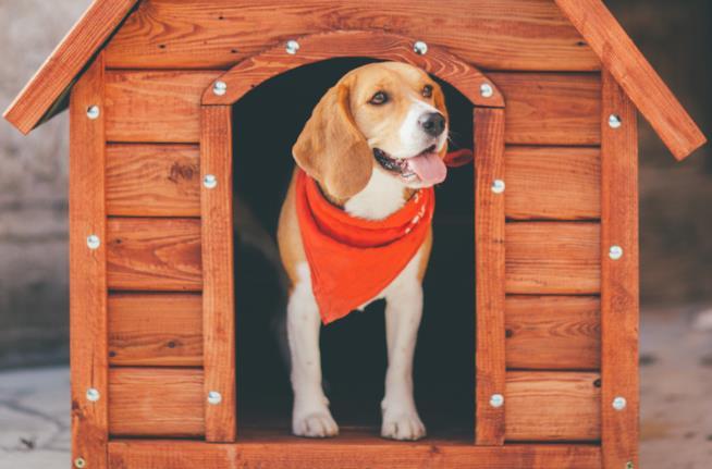 Un cane in una cuccia
