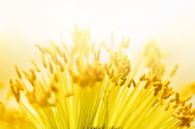 Benefici del polline