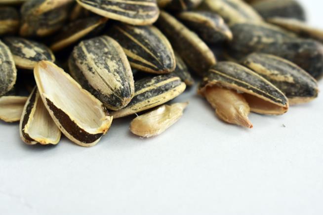 Tutte le varietà principali di semi di girasole