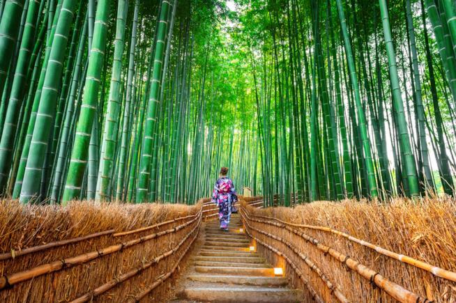 Una donna in kimono tra i bambù di Arashyiama