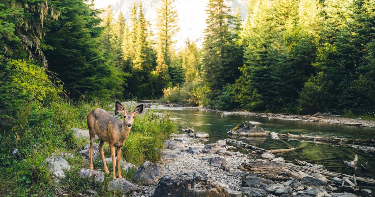 Imboscatevi: ecco i 13 boschi italiani più belli da visitare