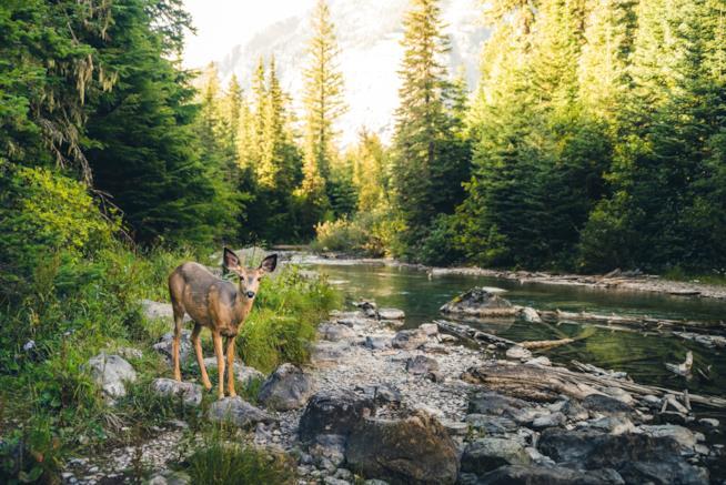 boschi-italiani-più-belli