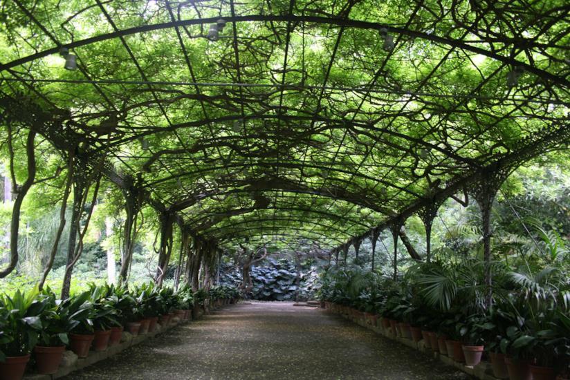 Giardino Botanico La Concepciòn