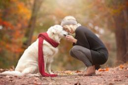 Una donna accarezza un cane nel bosco