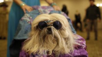 Un cane con gli occhiali da sole