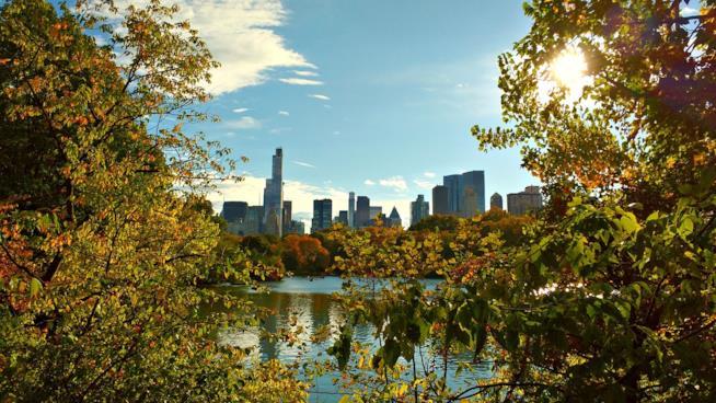 5 migliori mete per viaggiare con animali: New York - USA
