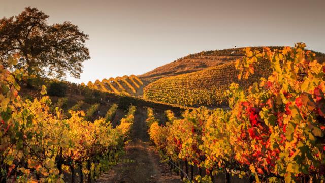 Le strade del vino da percorrere in Autunno