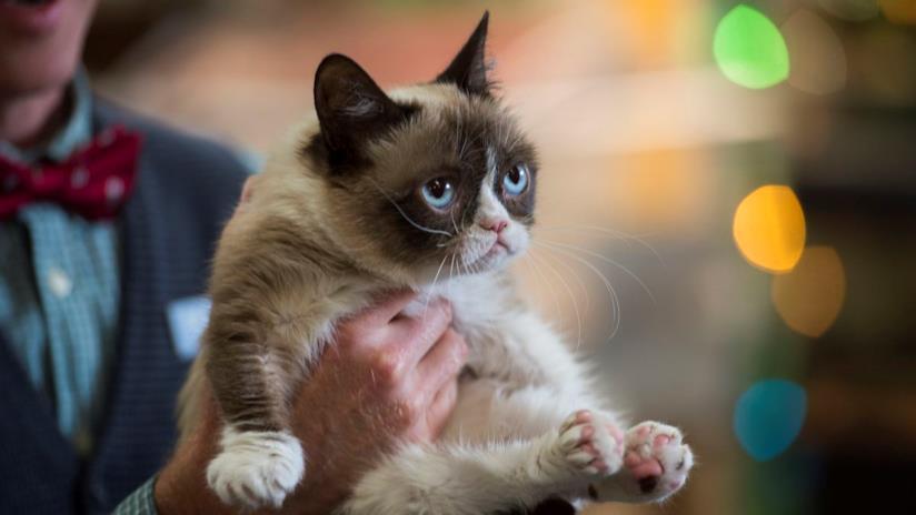 grumpy cat web star