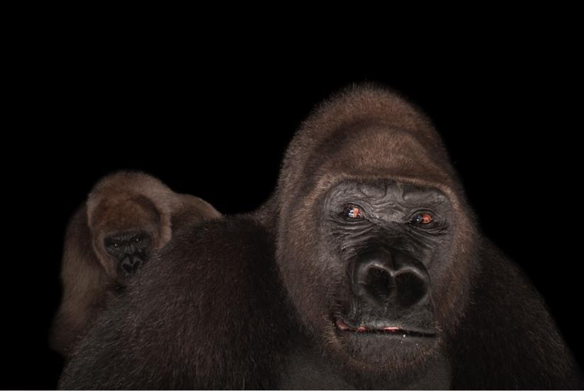 National Geographic: la mostra Photo Ark a Milano CityLife