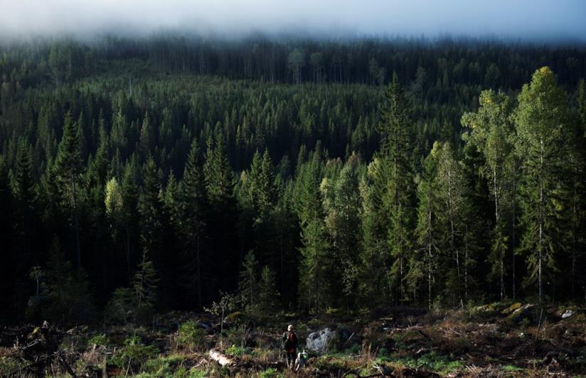Una persona passeggia in una foresta