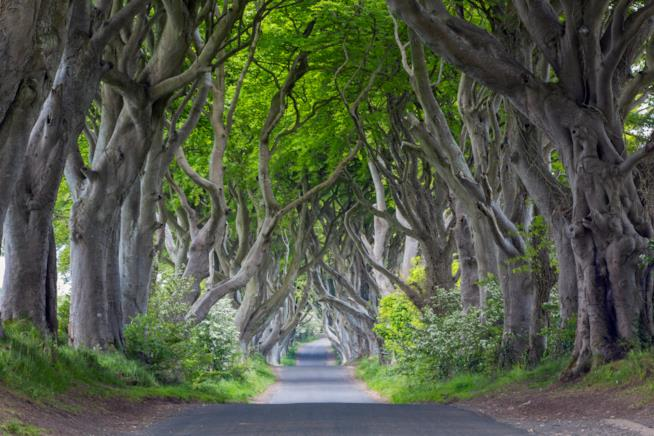 Dark Hegdes nei Glens of Antrim
