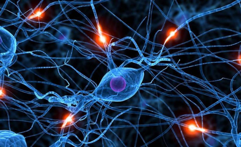 Gli impulsi elettrici nel nostro cervello