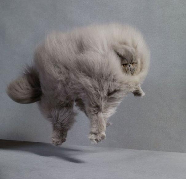 Un gatto grigio