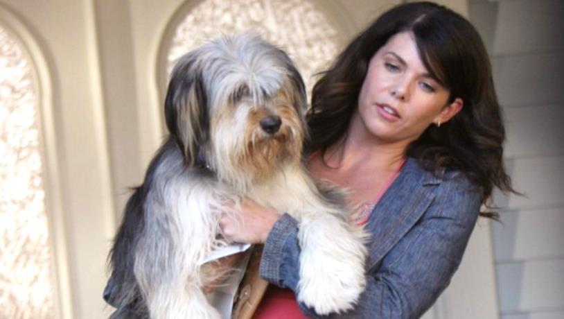 Il cane Paul Anka e Lorelai in una scena di Una mamma per amica